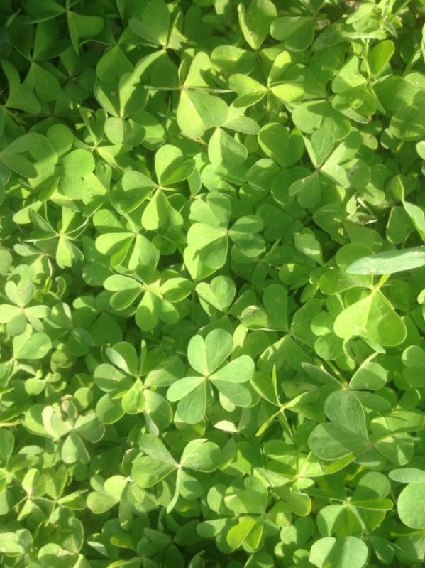 女生小清新皮肤图片_绿色森林攩住孓我的蓝海