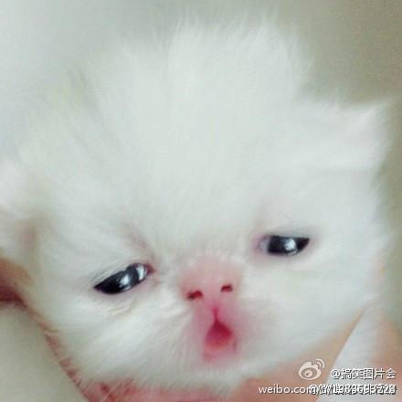 透明可爱猫咪皮肤图片